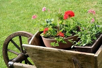 клумба на тележке садовой